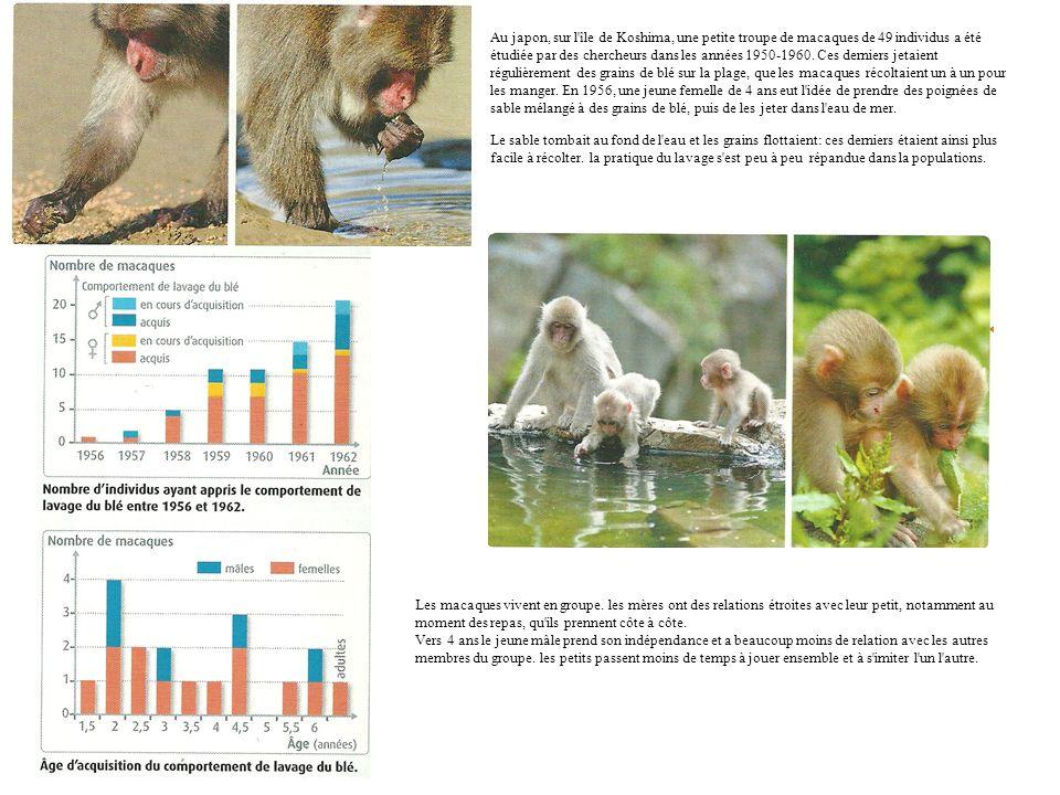 Au japon, sur l'île de Koshima, une petite troupe de macaques de 49 individus a été étudiée par des chercheurs dans les années 1950-1960. Ces derniers