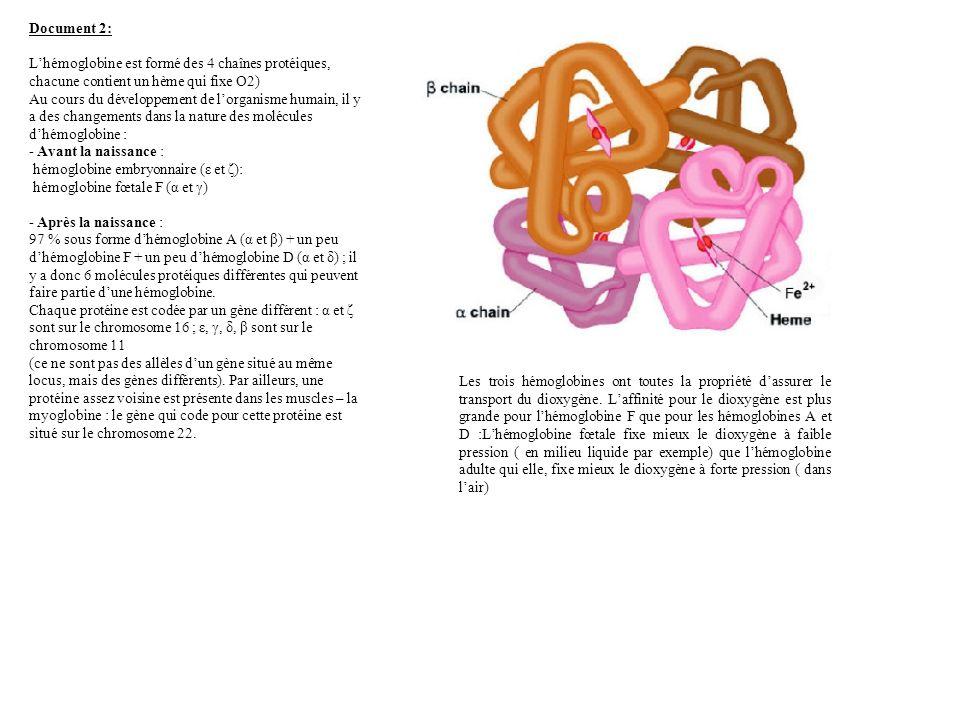 Document 2: Lhémoglobine est formé des 4 chaînes protéiques, chacune contient un hème qui fixe O2) Au cours du développement de lorganisme humain, il