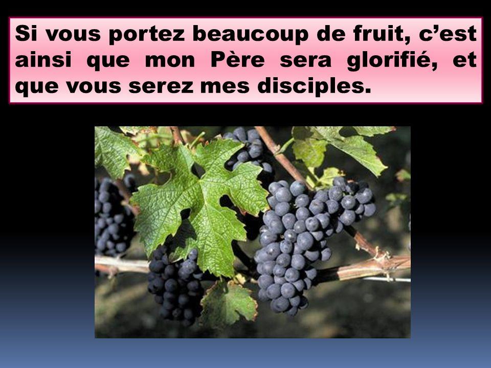 Si vous portez beaucoup de fruit, cest ainsi que mon Père sera glorifié, et que vous serez mes disciples.
