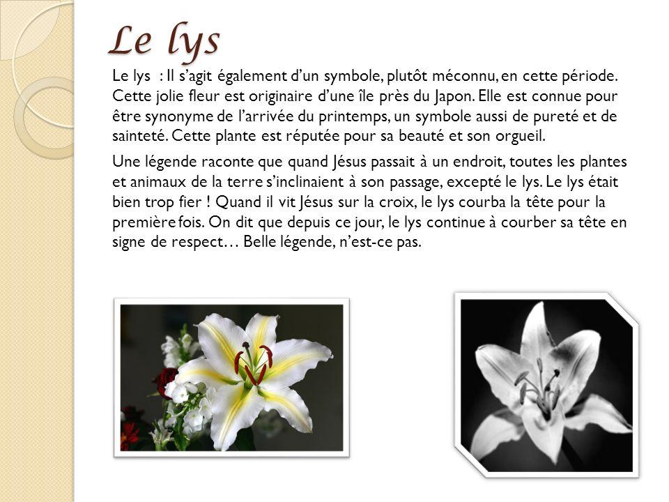 Le lys Le lys : Il sagit également dun symbole, plutôt méconnu, en cette période. Cette jolie fleur est originaire dune île près du Japon. Elle est co
