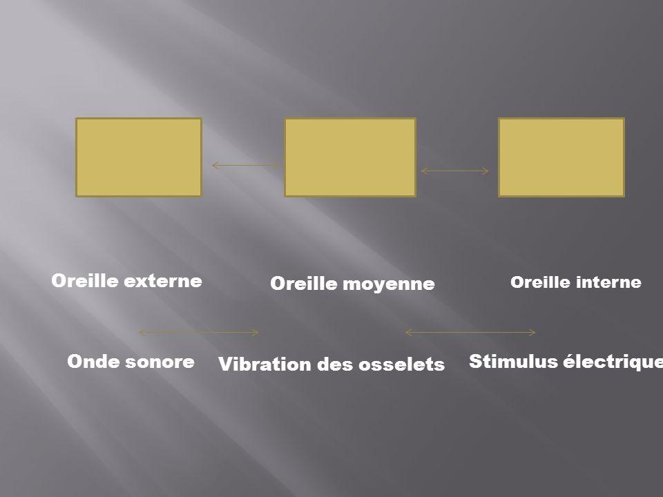 Oreille externe Oreille moyenne Oreille interne Onde sonore Vibration des osselets Stimulus électrique