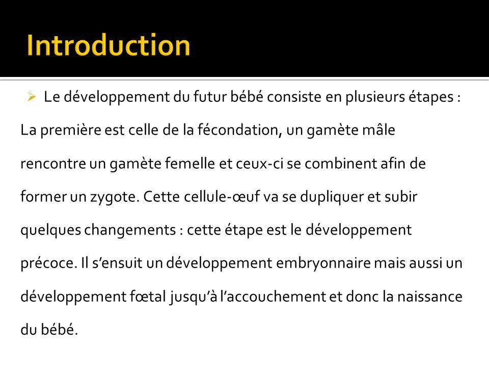 Le développement du futur bébé consiste en plusieurs étapes : La première est celle de la fécondation, un gamète mâle rencontre un gamète femelle et ceux-ci se combinent afin de former un zygote.