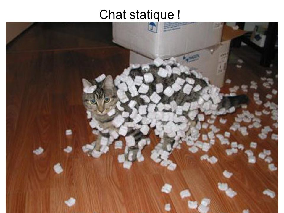 Chat statique !