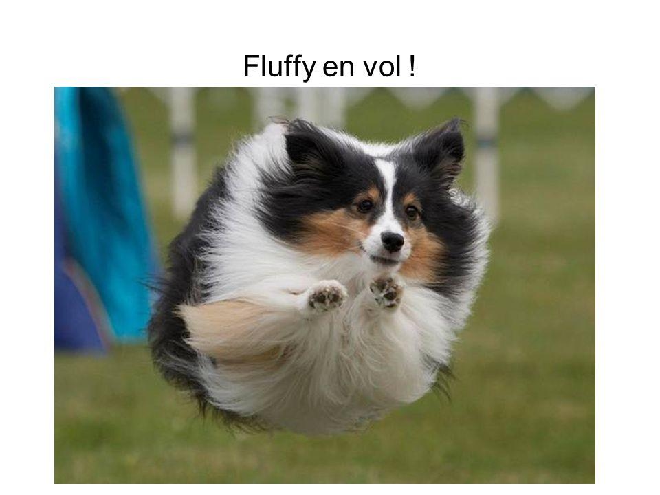 Fluffy en vol !