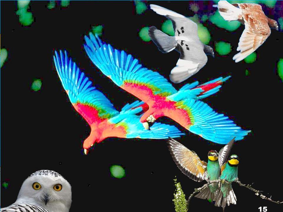 Dieu créa tous les êtres vivants dans les eaux et tous les oiseaux qui volent. Et Dieu vit que cela était bon. Dieu les bénit avec ces paroles : « Soy