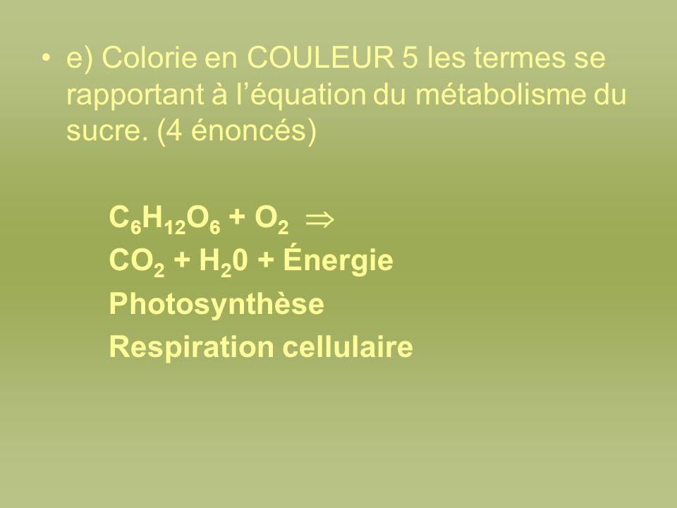 e) Colorie en COULEUR 5 les termes se rapportant à léquation du métabolisme du sucre. (4 énoncés) C 6 H 12 O 6 + O 2 CO 2 + H 2 0 + Énergie Photosynth