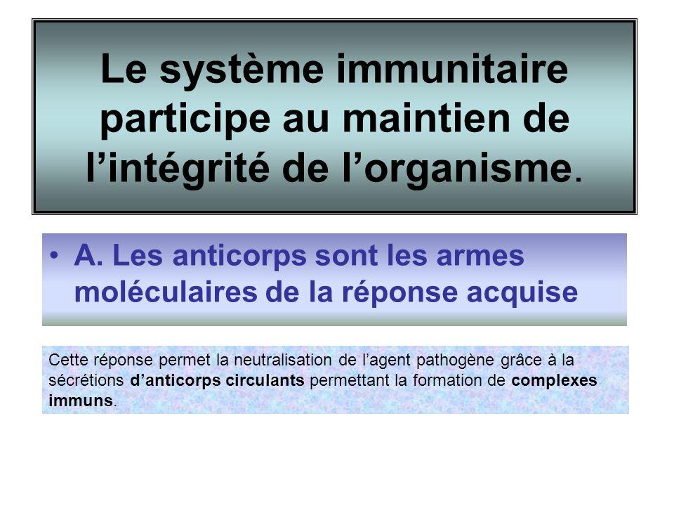 Le système immunitaire participe au maintien de lintégrité de lorganisme. A. Les anticorps sont les armes moléculaires de la réponse acquise Cette rép