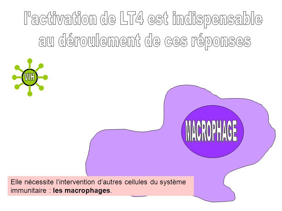 Elle nécessite lintervention dautres cellules du système immunitaire : les macrophages.