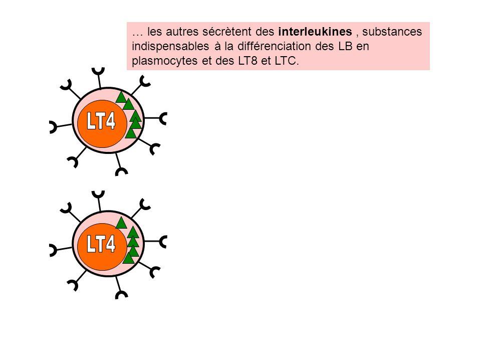 … les autres sécrètent des interleukines, substances indispensables à la différenciation des LB en plasmocytes et des LT8 et LTC.