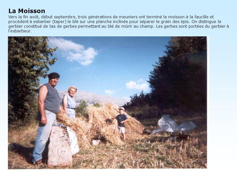 La Moisson Vers la fin août, début septembre, trois générations de meuniers ont terminé la moisson à la faucille et procèdent à esbarber (taper) le bl
