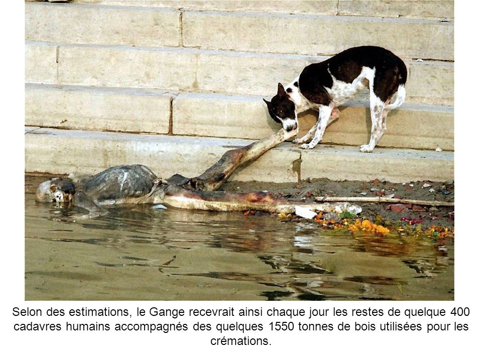 Pour ne rien arranger, la police et les services de nettoyage se débarassent également des corps non réclamés dans les puissantes eaux du fleuve.