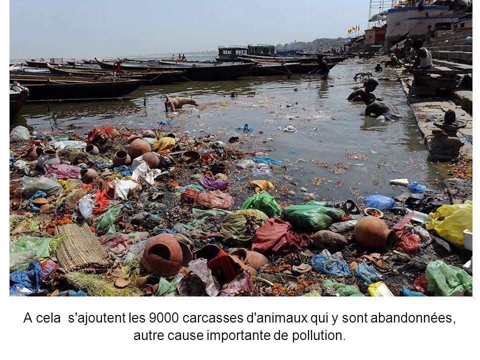 Selon des estimations, le Gange recevrait ainsi chaque jour les restes de quelque 400 cadavres humains accompagnés des quelques 1550 tonnes de bois ut