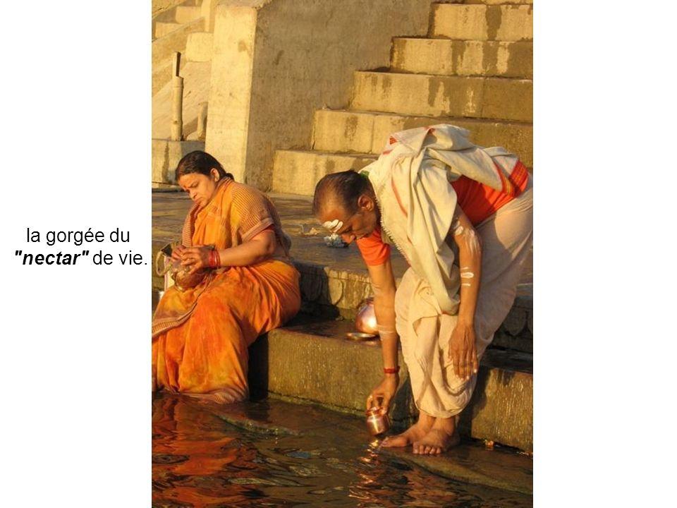 Ils déclinent leurs ablutions en trois gestes : la salutation au soleil, l'immersion dans le fleuve sacré et…