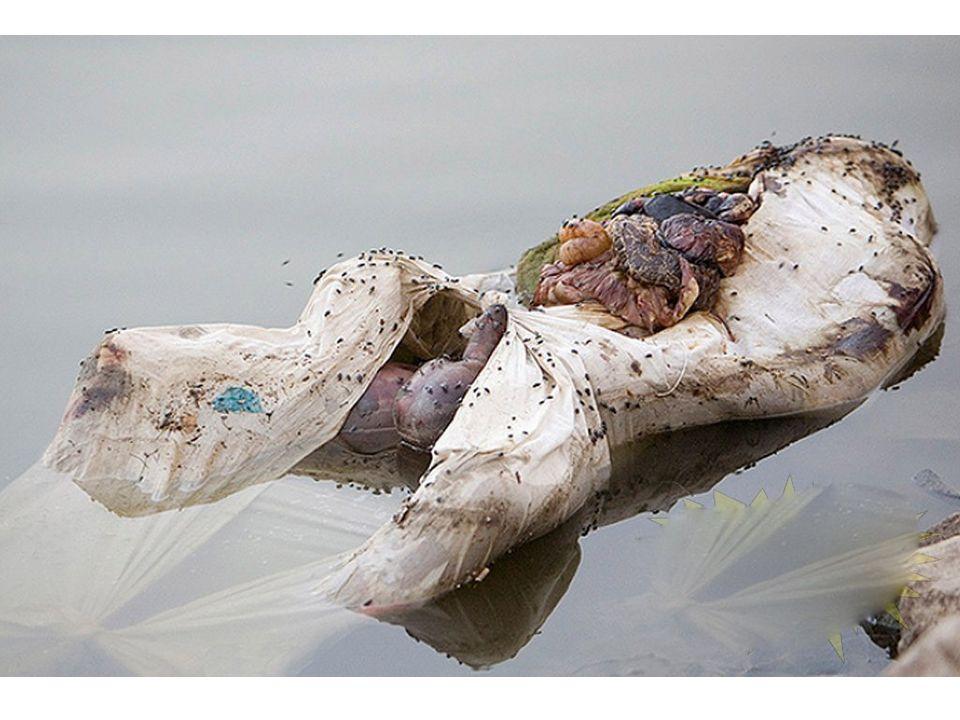Après la crémation, les cendres du défunt sont alors dispersées dans le fleuve sacré. De nombreuses familles hindoues nont malheureusement pas les moy