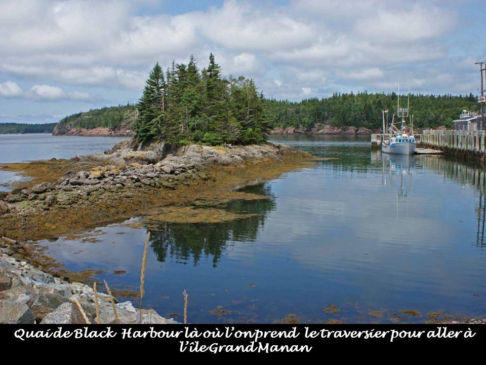Machias Seal Island où vivent une colonie de macareux moines.