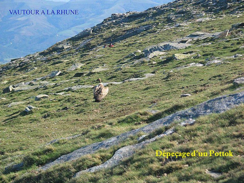 La Rhune/Larrun 905m Vue sur Ibardin et Hendaye