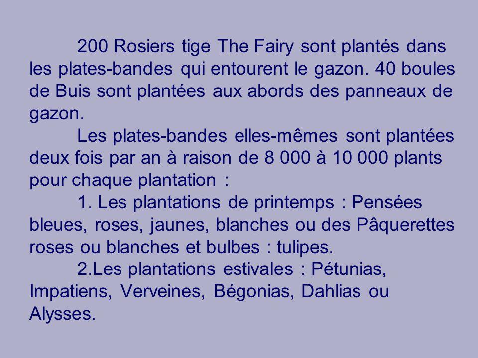 200 Rosiers tige The Fairy sont plantés dans les plates-bandes qui entourent le gazon. 40 boules de Buis sont plantées aux abords des panneaux de gazo