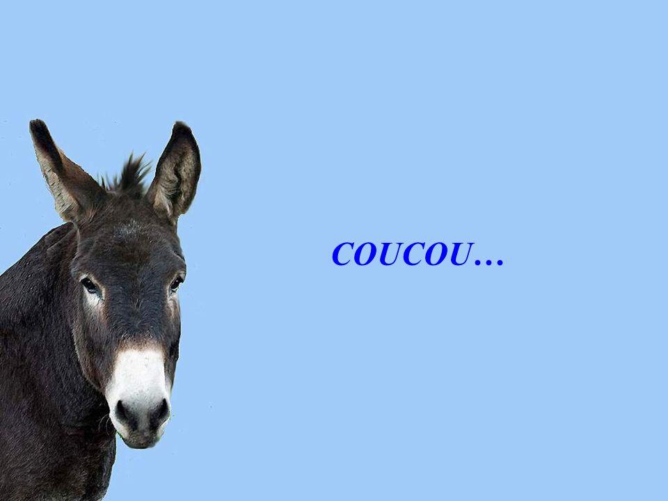 COUCOU…