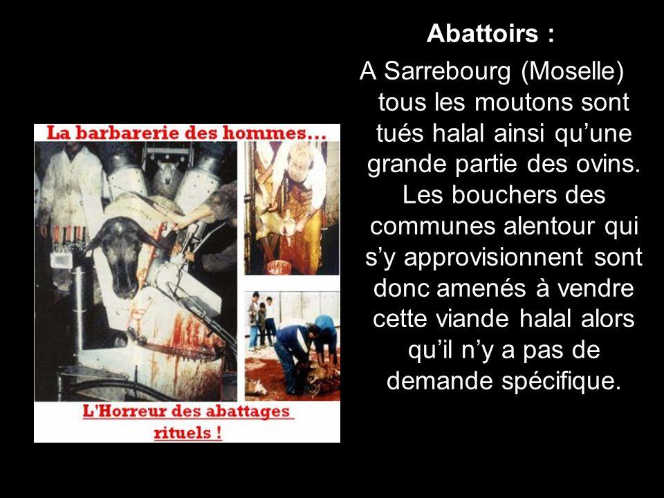 Abattoirs : A Sarrebourg (Moselle) tous les moutons sont tués halal ainsi quune grande partie des ovins.