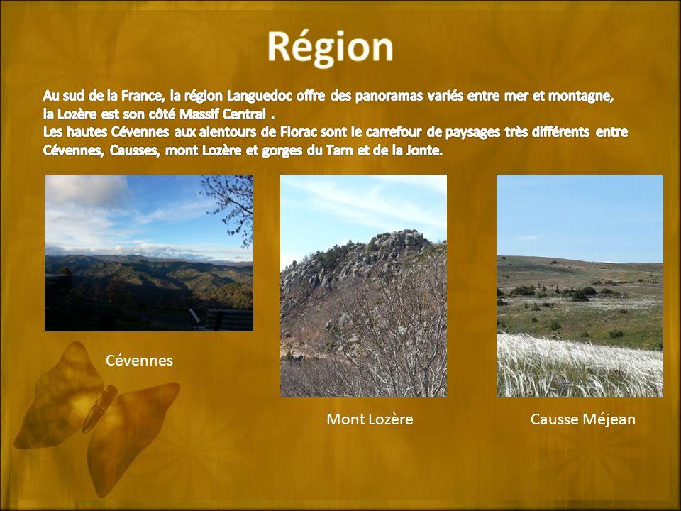 Cévennes Mont LozèreCausse Méjean