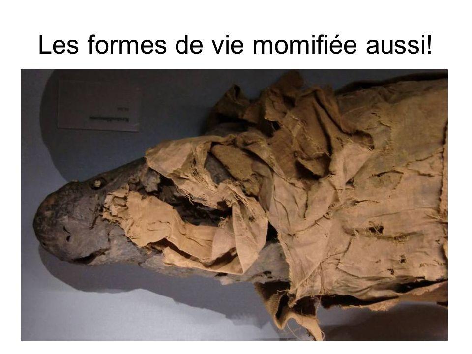 Les formes de vie momifiée aussi!