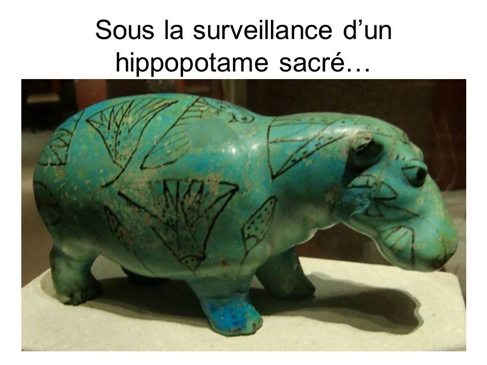 Sous la surveillance dun hippopotame sacré…