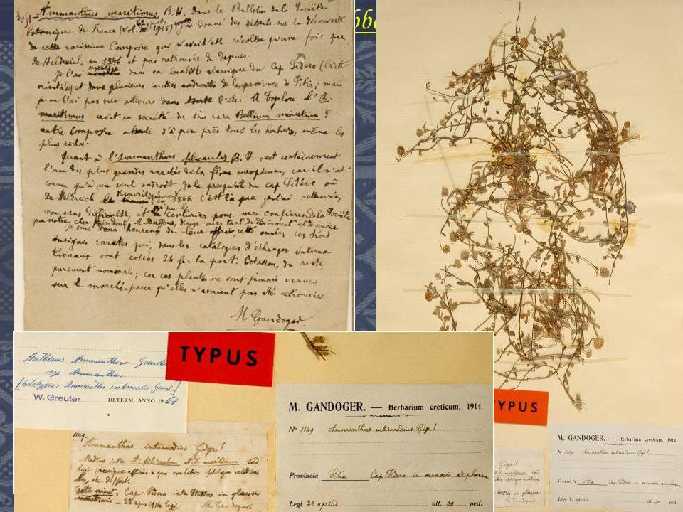 Voyage en Crête de labbé Michel Gandoger « Le mot Ammanthus créé par Boissier, induit en erreur.