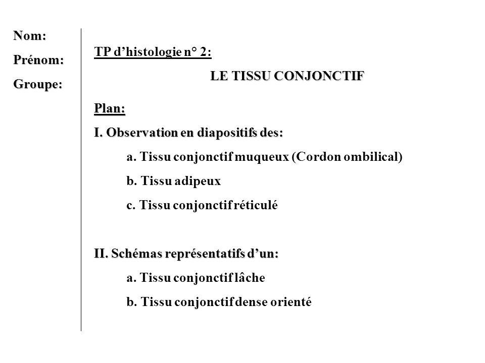 Nom:Prénom:Groupe: TP dhistologie n° 2: LE TISSU CONJONCTIF Plan: I. Observation en diapositifs des: a. Tissu conjonctif muqueux (Cordon ombilical) b.
