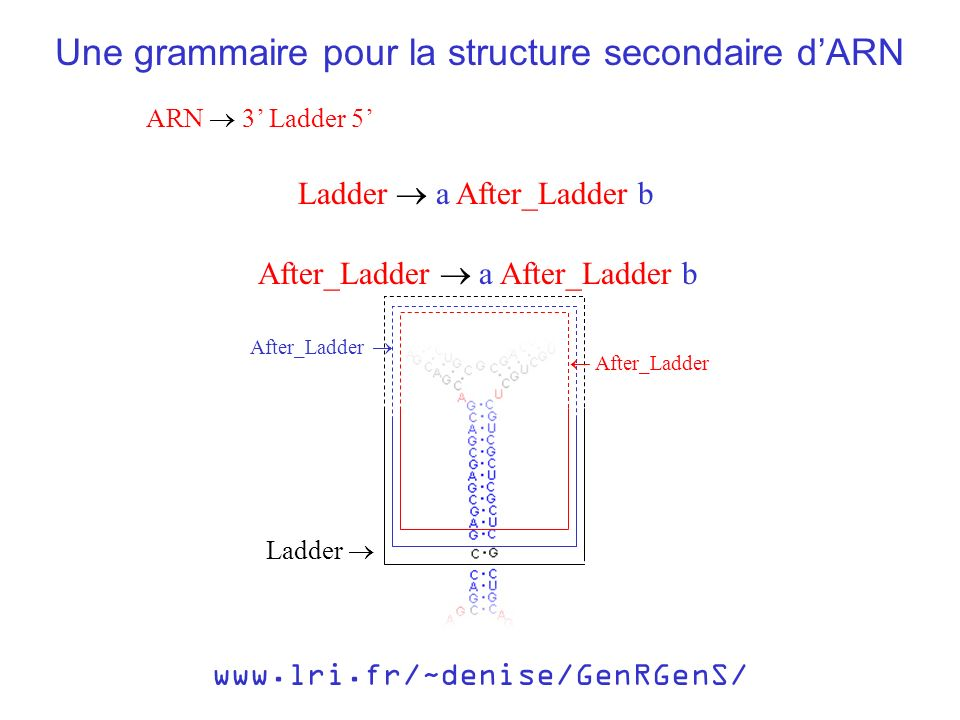 ARN 3 Ladder 5 Une grammaire pour la structure secondaire dARN Ladder a After_Ladder b After_Ladder a After_Ladder b www.lri.fr/~denise/GenRGenS/ Afte