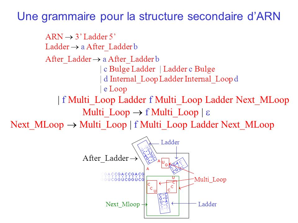 ARN 3 Ladder 5 Une grammaire pour la structure secondaire dARN Ladder a After_Ladder b After_Ladder a After_Ladder b | c Bulge Ladder | d Internal_Loo