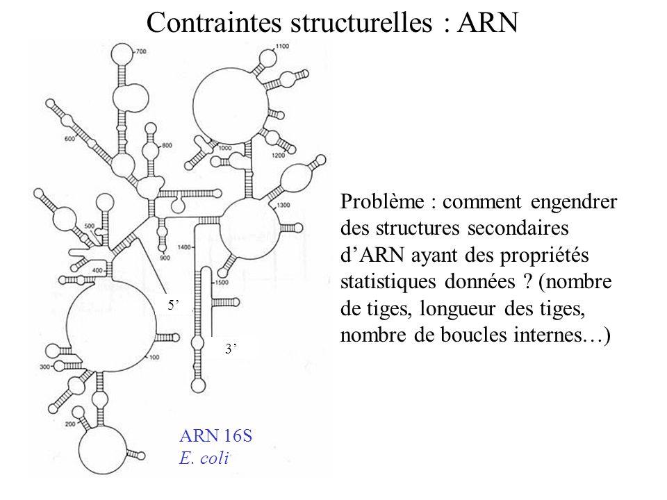 5 3 ARN 16S E. coli Contraintes structurelles : ARN Problème : comment engendrer des structures secondaires dARN ayant des propriétés statistiques don
