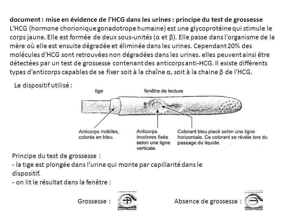 document : mise en évidence de l'HCG dans les urines : principe du test de grossesse L'HCG (hormone chorionique gonadotrope humaine) est une glycoprot
