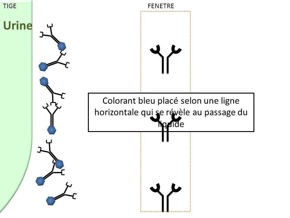 Colorant bleu placé selon une ligne horizontale qui se révèle au passage du liquide TIGE FENETRE Urine