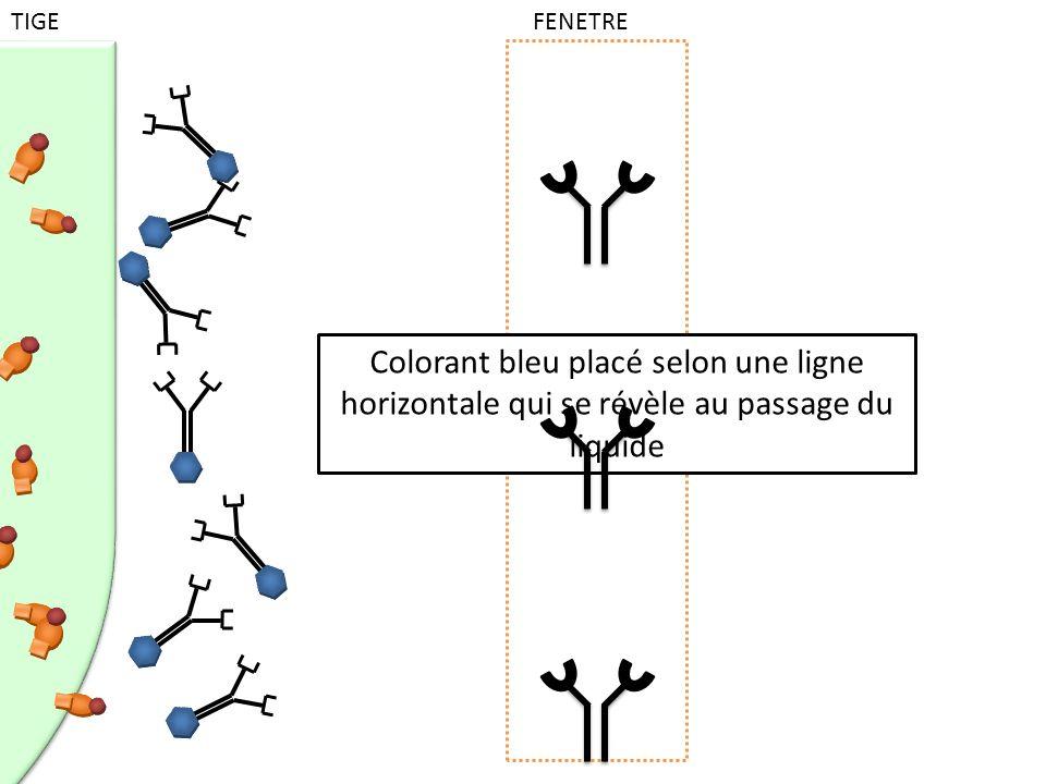 Colorant bleu placé selon une ligne horizontale qui se révèle au passage du liquide TIGE FENETRE