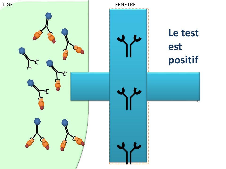 Colorant bleu placé selon une ligne horizontale qui se révèle au passage du liquide Le test est positif TIGE FENETRE