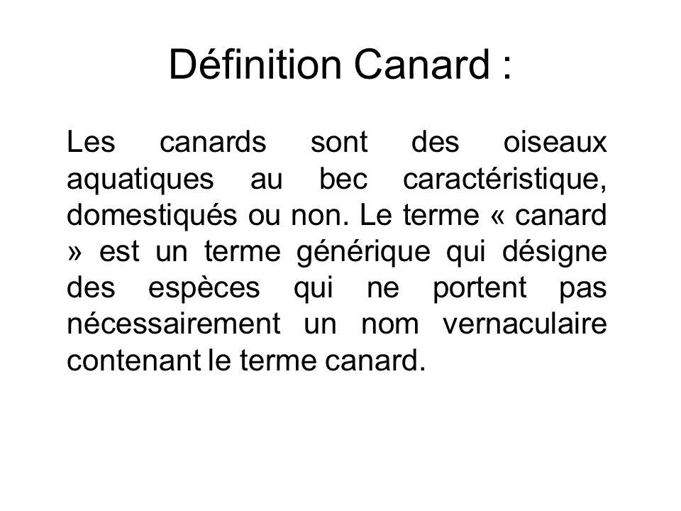 Définition Canard : Les canards sont des oiseaux aquatiques au bec caractéristique, domestiqués ou non. Le terme « canard » est un terme générique qui