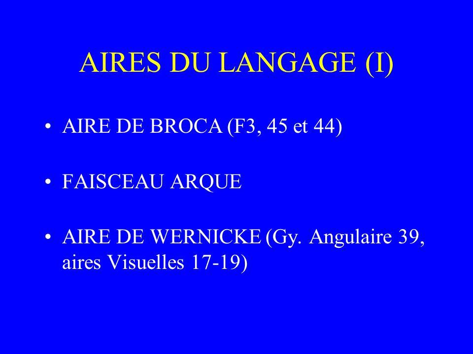 AIRES DU LANGAGE (I) AIRE DE BROCA (F3, 45 et 44) FAISCEAU ARQUE AIRE DE WERNICKE (Gy. Angulaire 39, aires Visuelles 17-19)