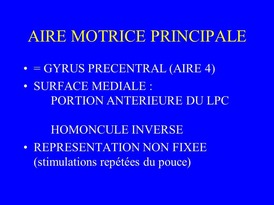 AIRE MOTRICE PRINCIPALE = GYRUS PRECENTRAL (AIRE 4) SURFACE MEDIALE : PORTION ANTERIEURE DU LPC HOMONCULE INVERSE REPRESENTATION NON FIXEE (stimulations repétées du pouce)