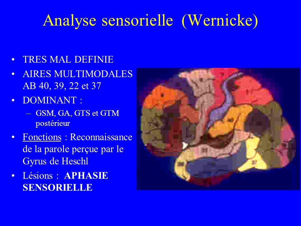 Analyse sensorielle (Wernicke) TRES MAL DEFINIE AIRES MULTIMODALES AB 40, 39, 22 et 37 DOMINANT : –GSM, GA, GTS et GTM postérieur Fonctions : Reconnaissance de la parole perçue par le Gyrus de Heschl Lésions : APHASIE SENSORIELLE