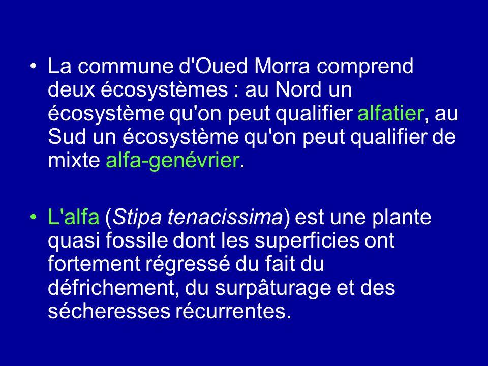 La commune d'Oued Morra comprend deux écosystèmes : au Nord un écosystème qu'on peut qualifier alfatier, au Sud un écosystème qu'on peut qualifier de