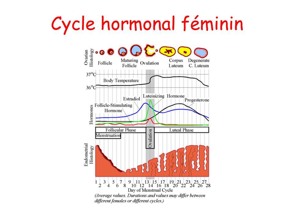 Cycle hormonal féminin