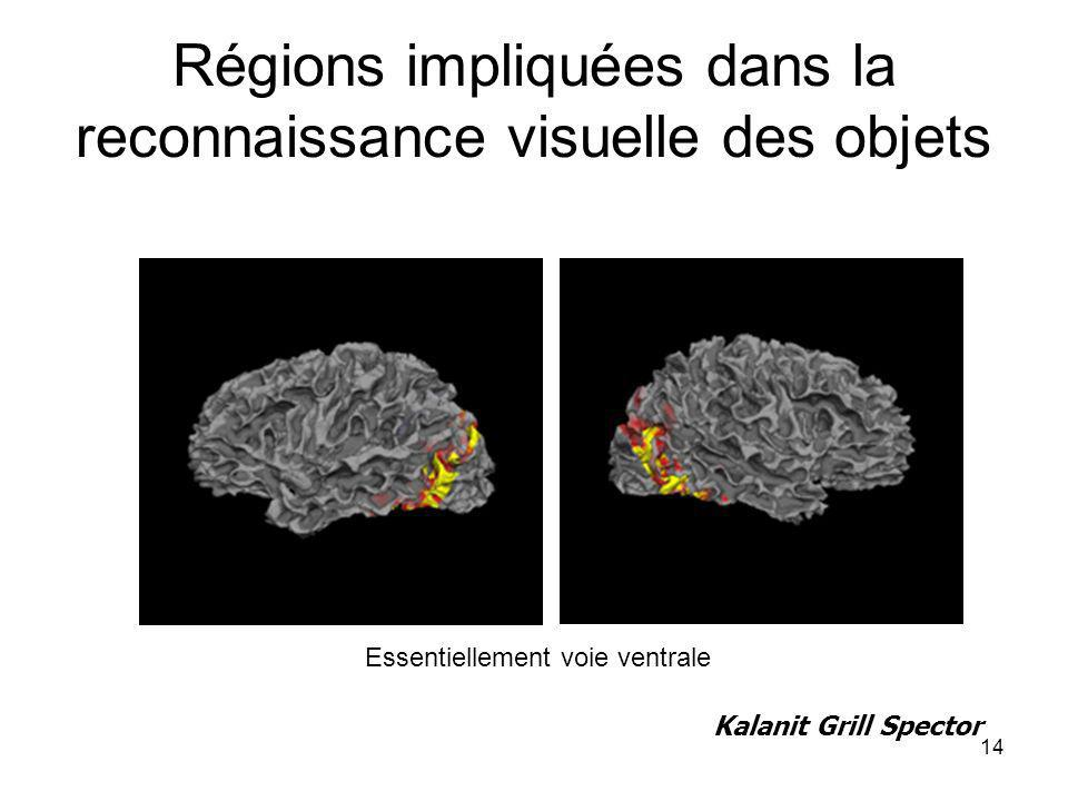14 Régions impliquées dans la reconnaissance visuelle des objets Kalanit Grill Spector Essentiellement voie ventrale