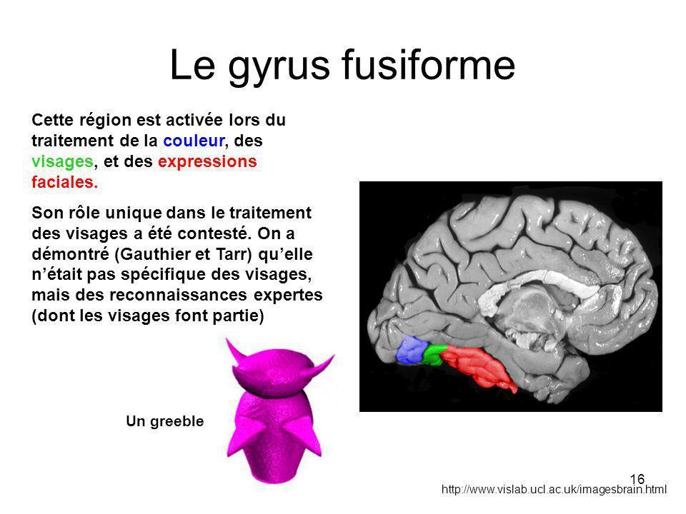 16 Le gyrus fusiforme http://www.vislab.ucl.ac.uk/imagesbrain.html Cette région est activée lors du traitement de la couleur, des visages, et des expressions faciales.