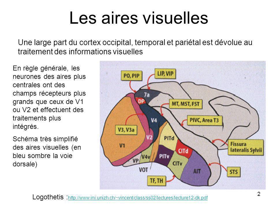 2 Les aires visuelles Logothetis : http://www.ini.unizh.ch/~vincent/class/ss02/lectures/lecture12-dk.pdf http://www.ini.unizh.ch/~vincent/class/ss02/lectures/lecture12-dk.pdf Une large part du cortex occipital, temporal et pariétal est dévolue au traitement des informations visuelles En règle générale, les neurones des aires plus centrales ont des champs récepteurs plus grands que ceux de V1 ou V2 et effectuent des traitements plus intégrés.