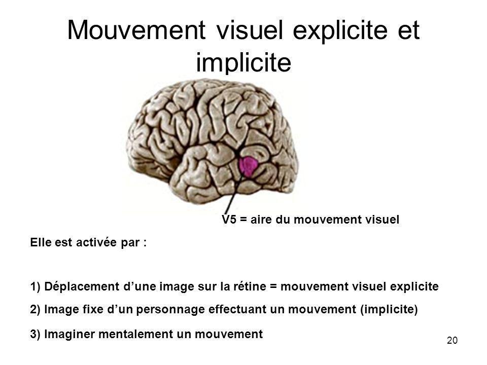 20 Mouvement visuel explicite et implicite Elle est activée par : 1) Déplacement dune image sur la rétine = mouvement visuel explicite 2) Image fixe dun personnage effectuant un mouvement (implicite) 3) Imaginer mentalement un mouvement V5 = aire du mouvement visuel