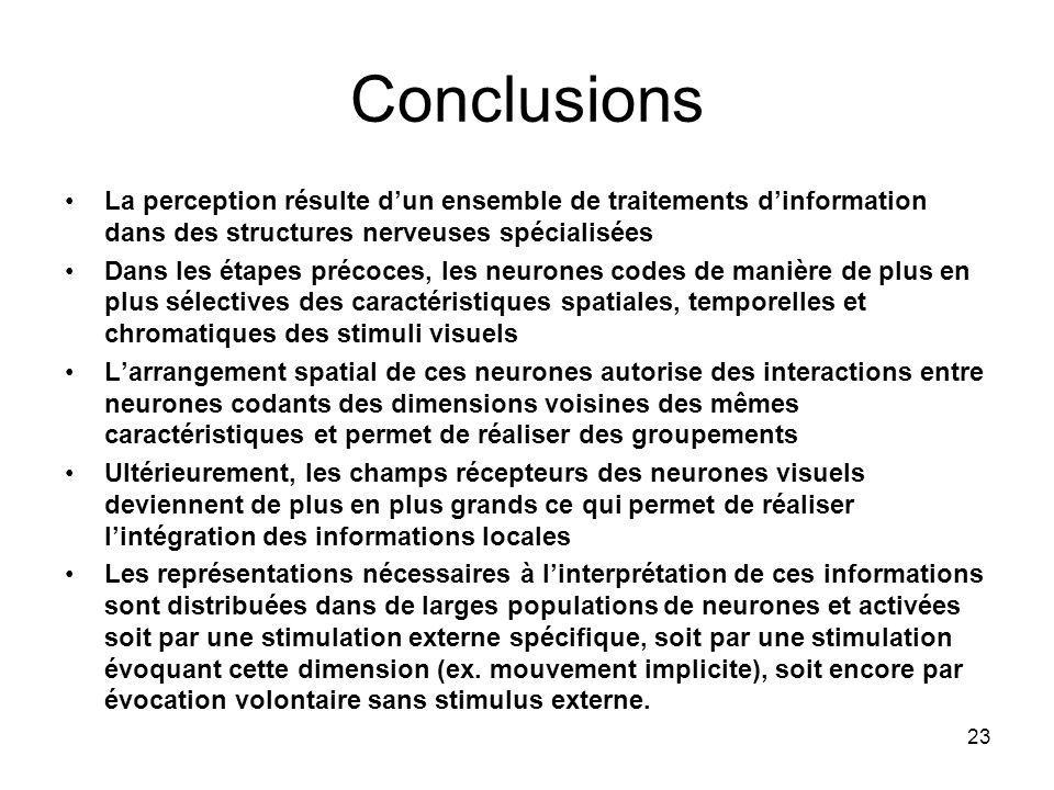 23 Conclusions La perception résulte dun ensemble de traitements dinformation dans des structures nerveuses spécialisées Dans les étapes précoces, les