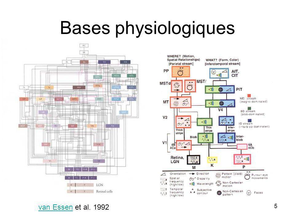 5 Bases physiologiques van Essen et al. 1992van Essen