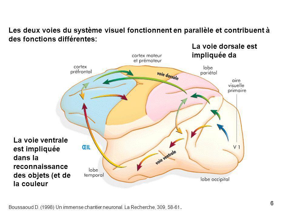6 Boussaoud D.(1998) Un immense chantier neuronal.