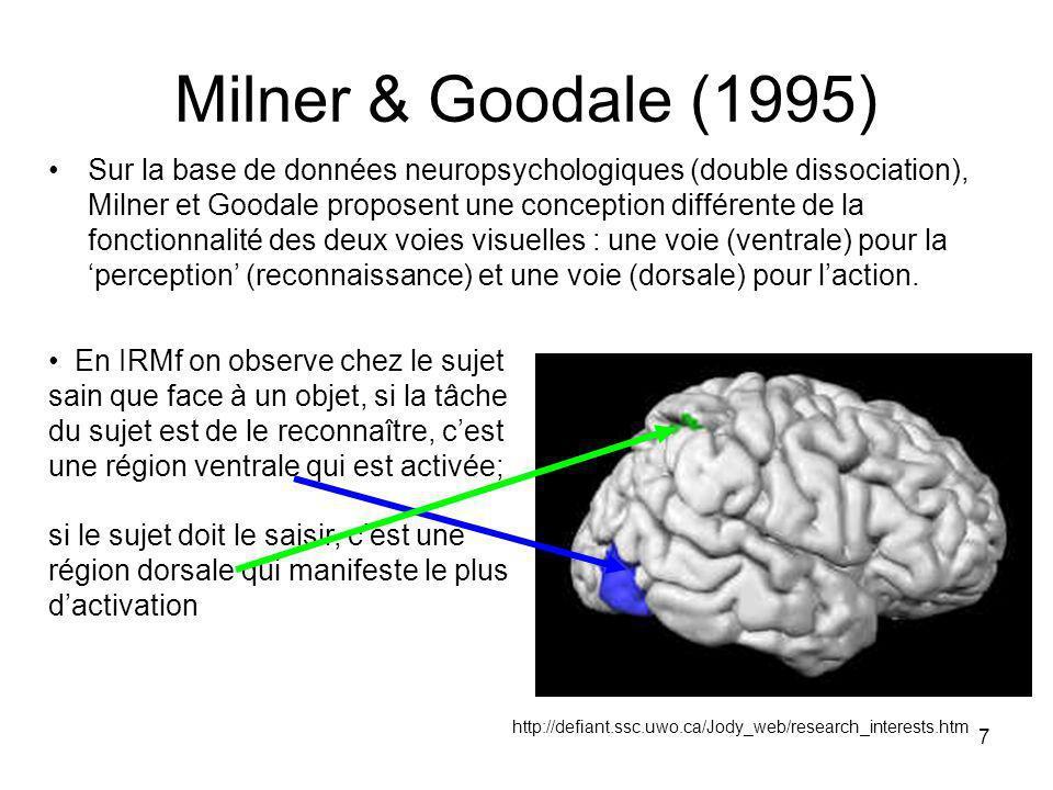 7 Milner & Goodale (1995) Sur la base de données neuropsychologiques (double dissociation), Milner et Goodale proposent une conception différente de la fonctionnalité des deux voies visuelles : une voie (ventrale) pour la perception (reconnaissance) et une voie (dorsale) pour laction.
