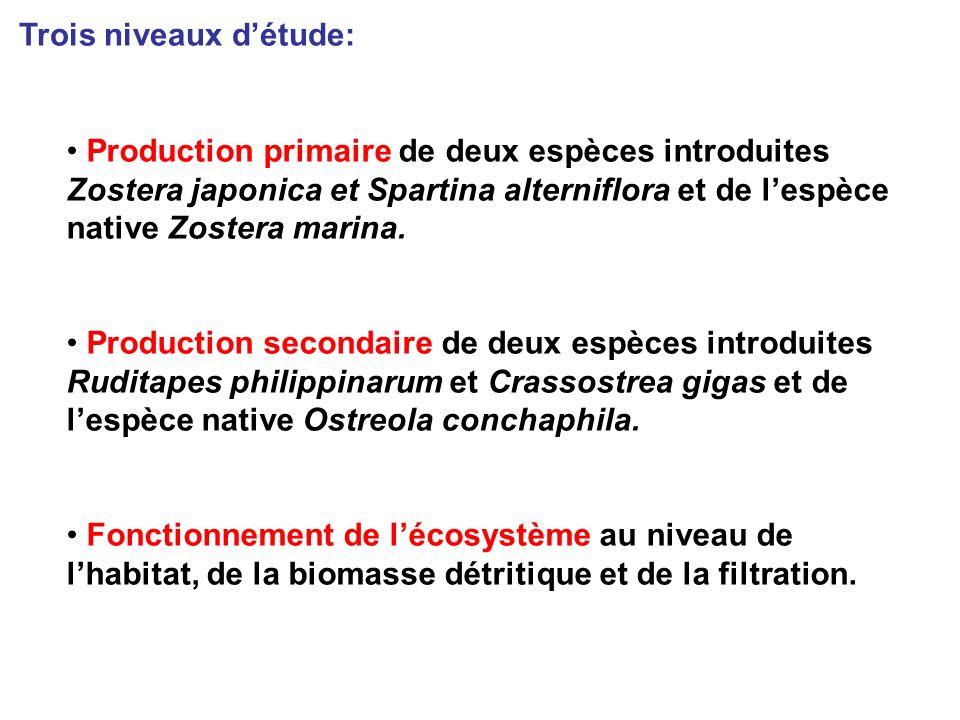 Production primaire de deux espèces introduites Zostera japonica et Spartina alterniflora et de lespèce native Zostera marina.